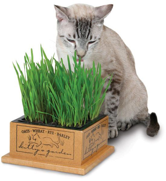 Picture of Kitty's Garden Kit