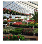 Picture of 26x12x72 Solar Star Gothic Greenhouse with Polycarbonate Top and...