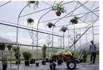 Picture of Majestic Greenhouse 20'W x 36'L Drop Down w/Film
