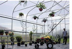 Picture of Majestic Greenhouse 20'W x 60'L Drop Down w/Film